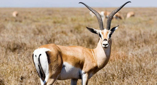 Tanzania Design Safaris